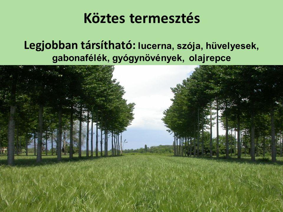 Köztes termesztés Legjobban társítható: lucerna, szója, hüvelyesek, gabonafélék, gyógynövények, olajrepce
