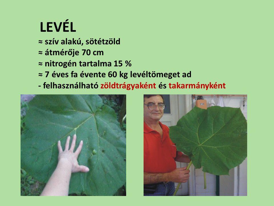 LEVÉL ≈ szív alakú, sötétzöld ≈ átmérője 70 cm ≈ nitrogén tartalma 15 % ≈ 7 éves fa évente 60 kg levéltömeget ad - felhasználható zöldtrágyaként és ta