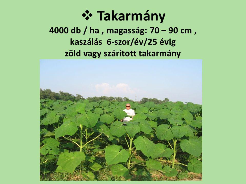  Takarmány 4000 db / ha, magasság: 70 – 90 cm, kaszálás 6-szor/év/25 évig zöld vagy szárított takarmány