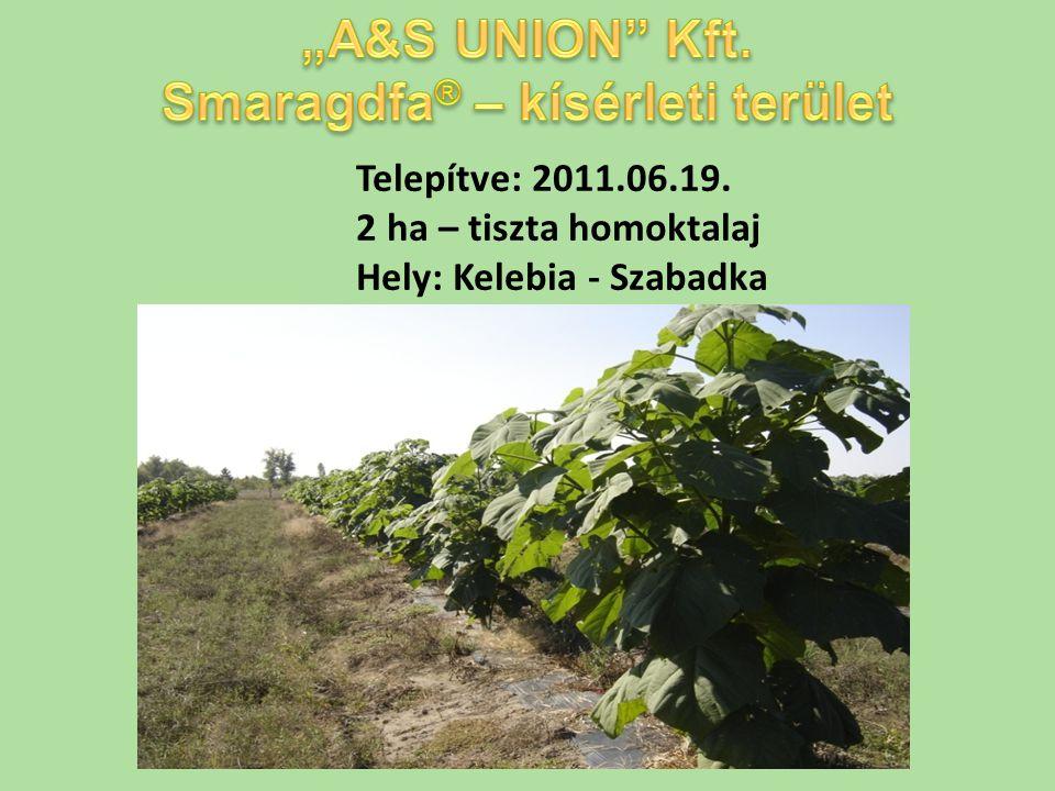 Telepítve: 2011.06.19. 2 ha – tiszta homoktalaj Hely: Kelebia - Szabadka