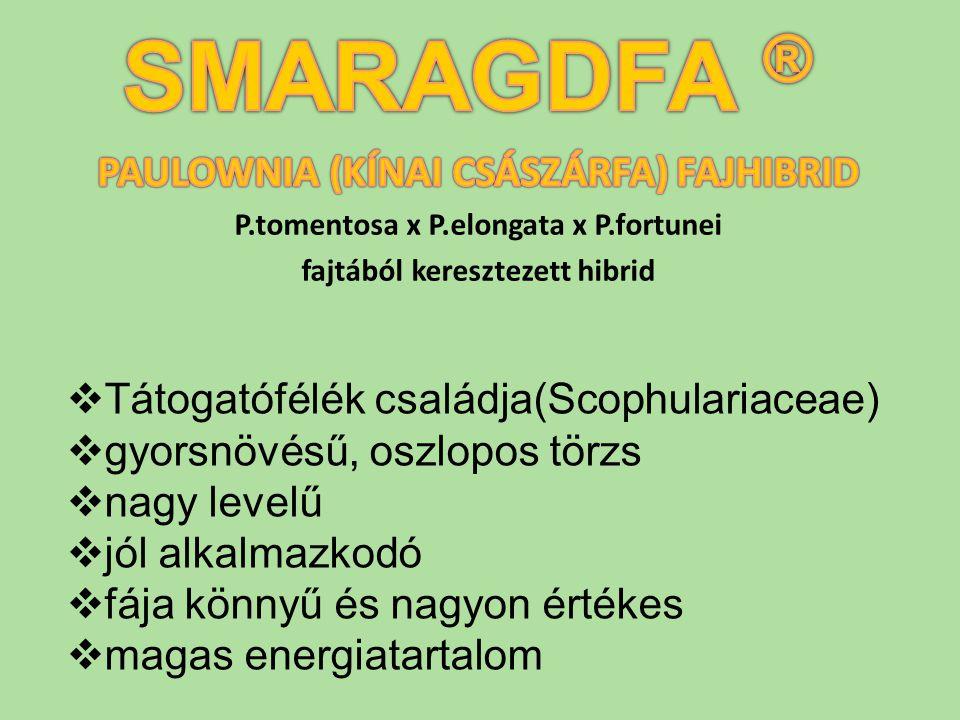  Tátogatófélék családja(Scophulariaceae)  gyorsnövésű, oszlopos törzs  nagy levelű  jól alkalmazkodó  fája könnyű és nagyon értékes  magas energ