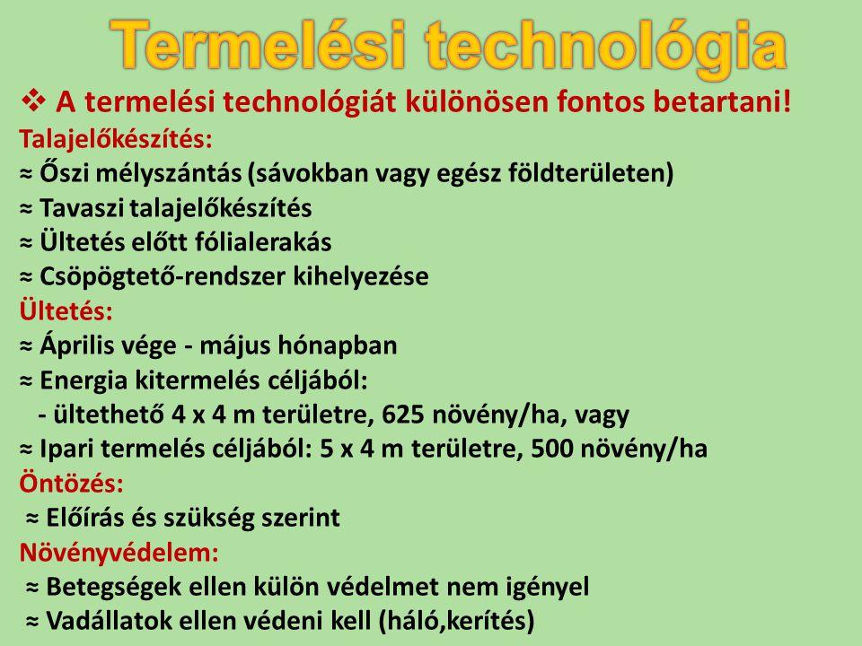  A termelési technológiát különösen fontos betartani! Talajelőkészítés: ≈ Őszi mélyszántás (sávokban vagy egész földterületen) ≈ Tavaszi talajelőkész