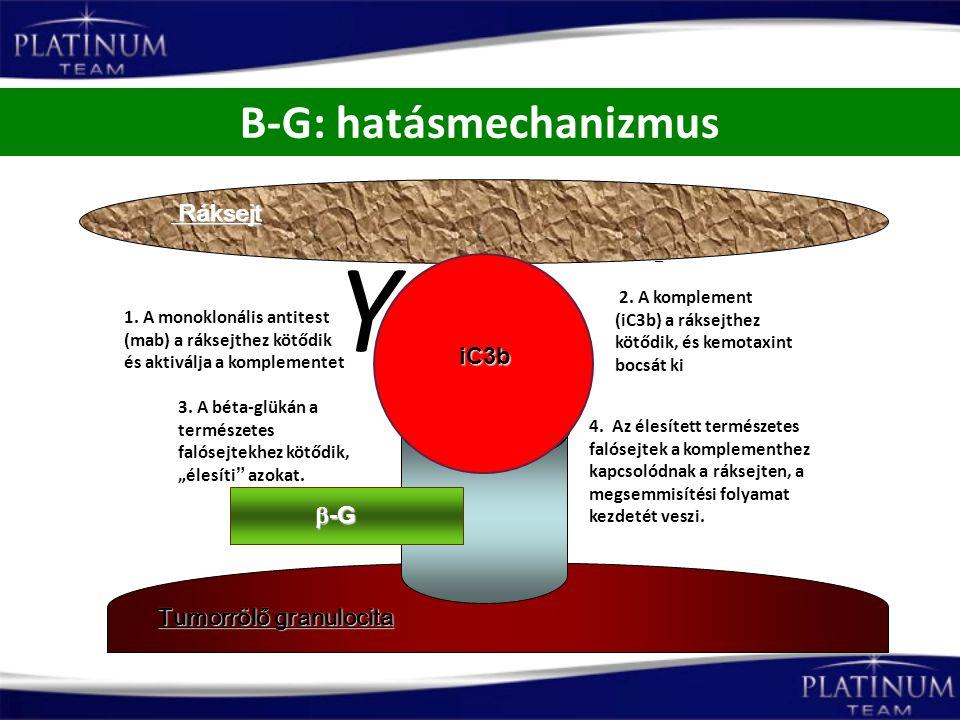 """B-G: hatásmechanizmus Tumorrölő granulocita 3. A béta-glükán a természetes falósejtekhez kötődik, """"élesíti"""" azokat. 2. A komplement (iC3b) a ráksejthe"""
