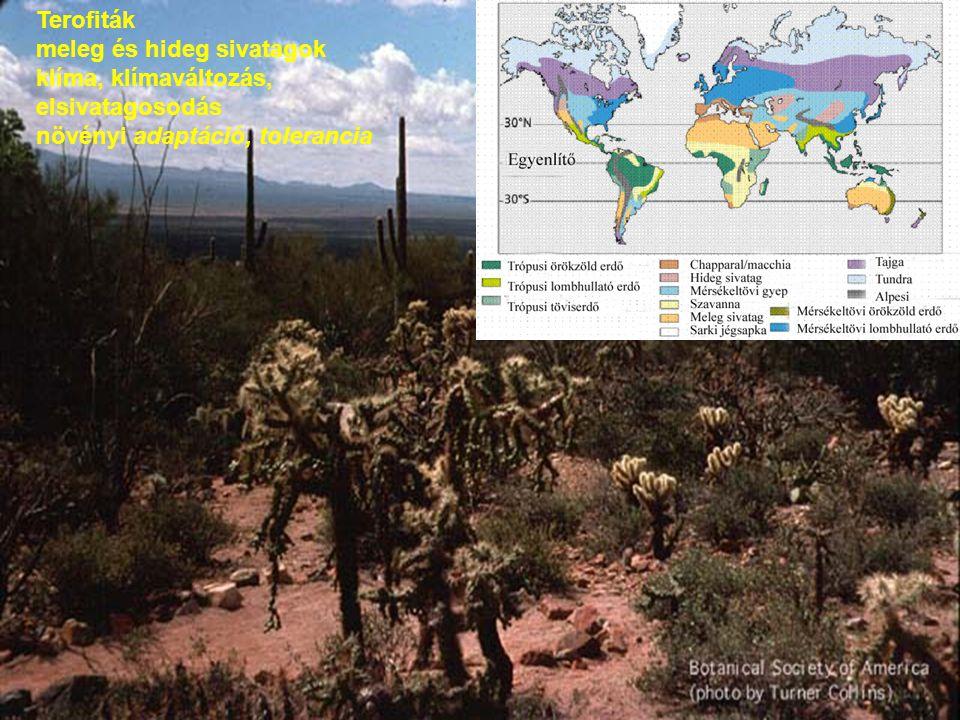 Terofiták meleg és hideg sivatagok klíma, klímaváltozás, elsivatagosodás növényi adaptáció, tolerancia