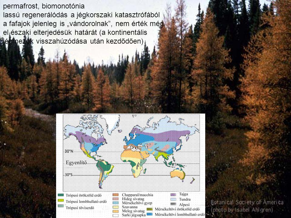 """permafrost, biomonotónia lassú regenerálódás a jégkorszaki katasztrófából a fafajok jelenleg is """"vándorolnak"""", nem érték még el északi elterjedésük ha"""