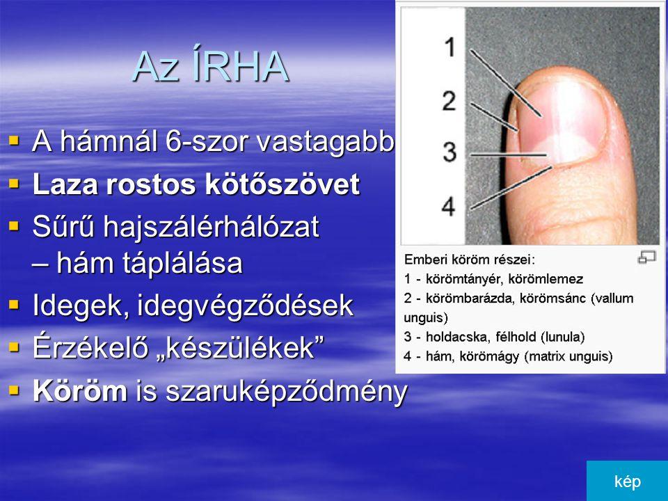 A bőralja  Legalsó réteg  Laza rostos kötőszövet  Sok zsírszövet – egyes testrészeken zsírpárna: –Mechanikai védelem, –Hőszigetelés –Tartalék tápanyag Kép