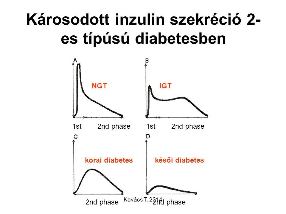 Károsodott inzulin szekréció 2- es típúsú diabetesben NGTIGT korai diabeteskésői diabetes 1st 2nd phase 2nd phase Kovács T. 2014