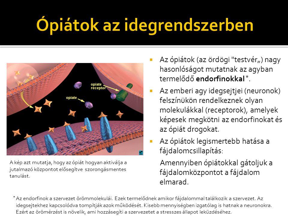  Az ópiátok (az ördögi