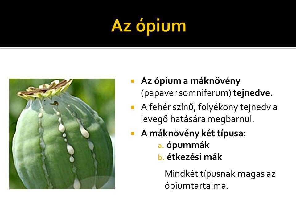  Az ópium a máknövény (papaver somniferum) tejnedve.  A fehér színű, folyékony tejnedv a levegő hatására megbarnul.  A máknövény két típusa: a. ópu