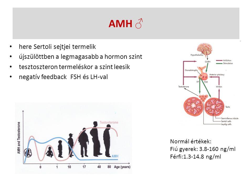 AMH ♂ here Sertoli sejtjei termelik újszülöttben a legmagasabb a hormon szint tesztoszteron termeléskor a szint leesik negatív feedback FSH és LH-val