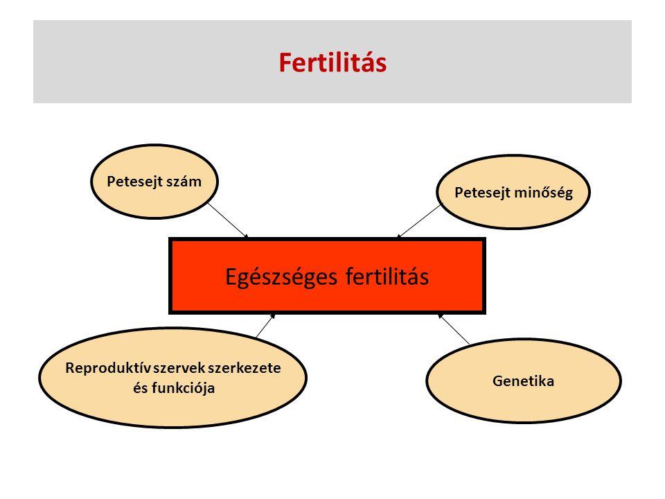 Fertilitás Egészséges fertilitás Petesejt szám Petesejt minőség Reproduktív szervek szerkezete és funkciója Genetika