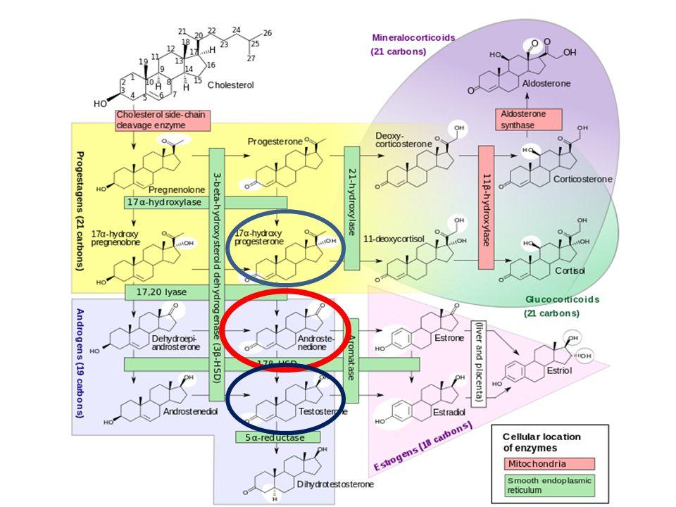 Endokrin eltérések-laboratóriumi vizsgálatok 2.