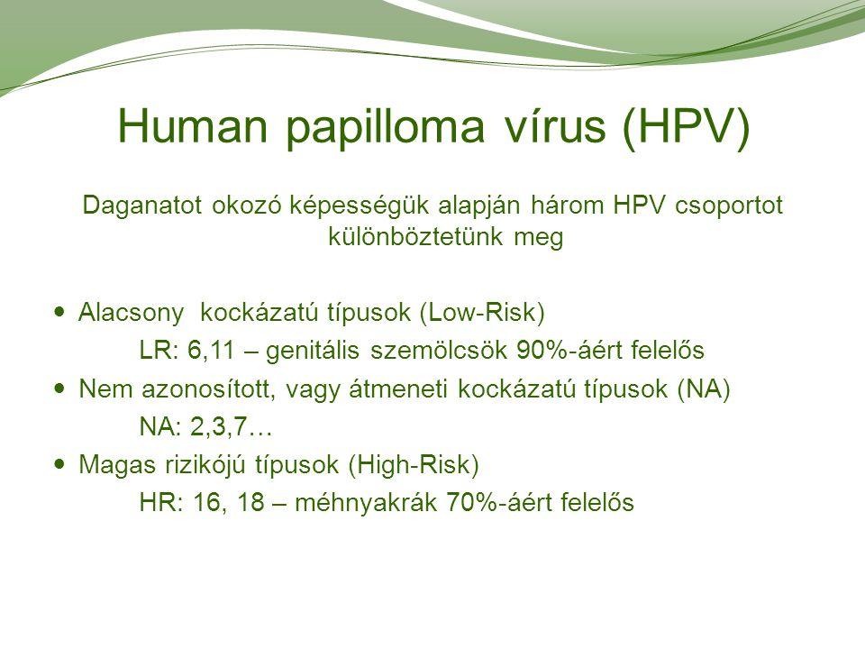 Human papilloma vírus (HPV) Daganatot okozó képességük alapján három HPV csoportot különböztetünk meg Alacsony kockázatú típusok (Low-Risk) LR: 6,11 –