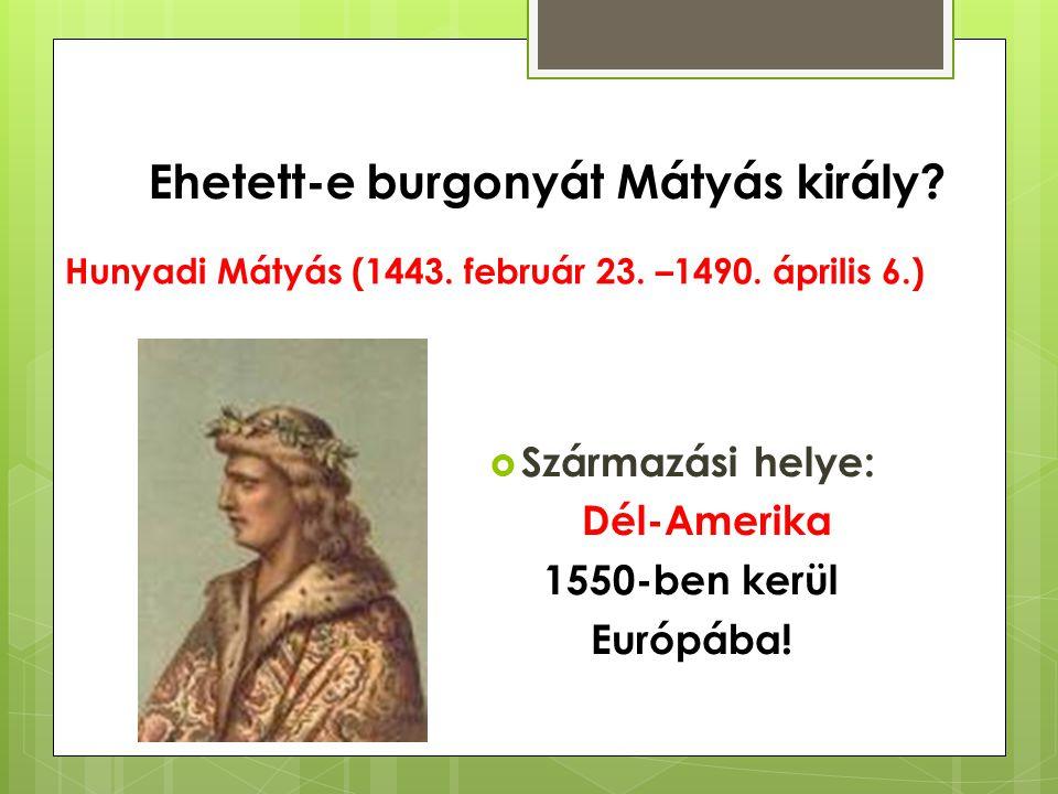 Hunyadi Mátyás (1443. február 23. –1490. április 6.)  Származási helye: Dél-Amerika 1550-ben kerül Európába! Ehetett-e burgonyát Mátyás király?