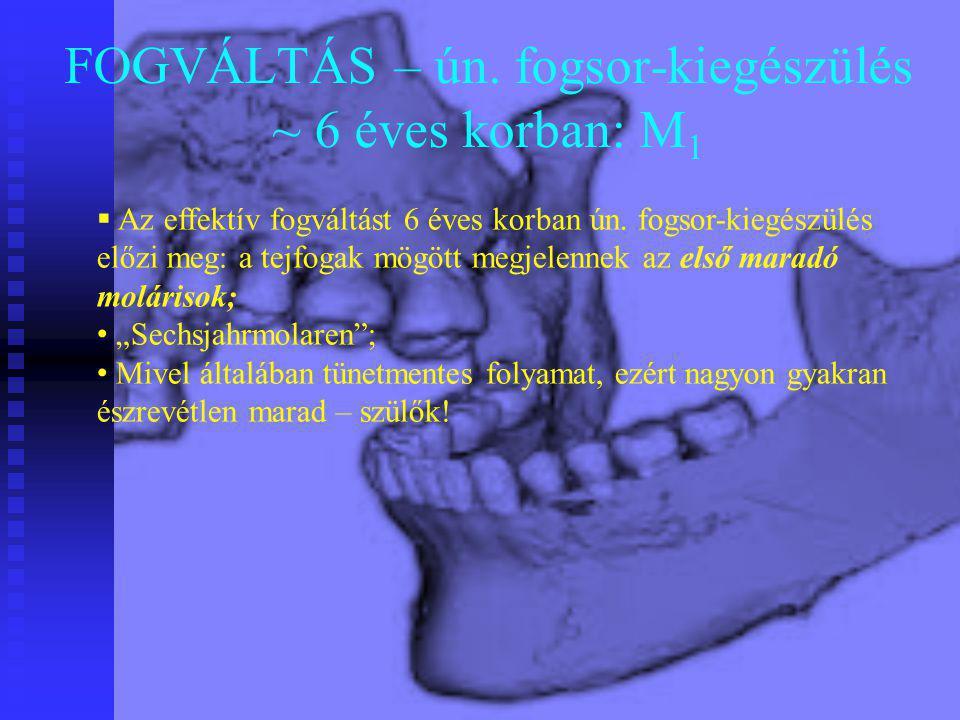 FOGVÁLTÁS – ún. fogsor-kiegészülés ~ 6 éves korban: M 1  Az effektív fogváltást 6 éves korban ún. fogsor-kiegészülés előzi meg: a tejfogak mögött meg