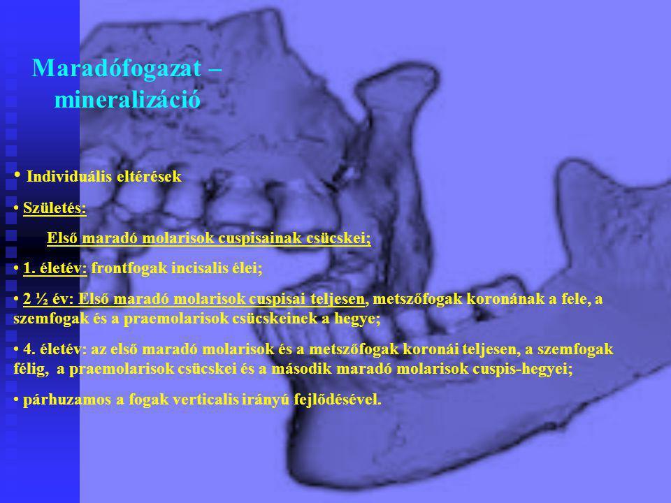 Individuális eltérések Születés: Első maradó molarisok cuspisainak csücskei; 1. életév: frontfogak incisalis élei; 2 ½ év: Első maradó molarisok cuspi