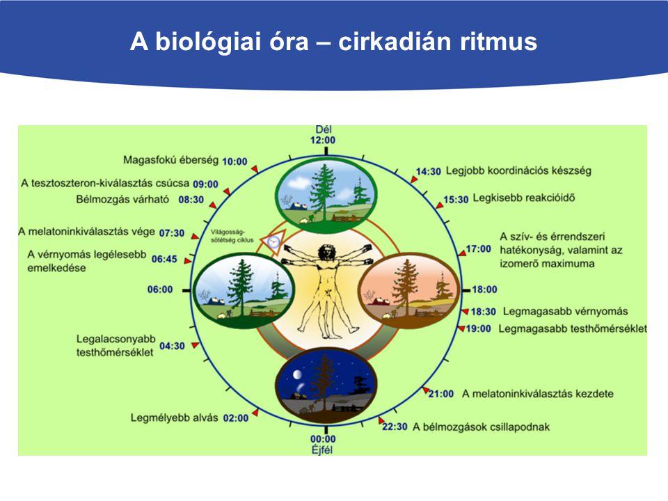 A biológiai óra – cirkadián ritmus