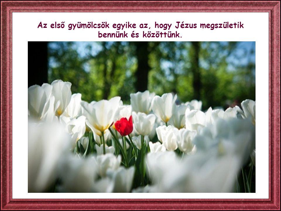 Ahogy a testnek lélegeznie kell ahhoz, hogy éljen, ugyanúgy a léleknek is, hogy éljen, Isten Igéjét kell élnie.