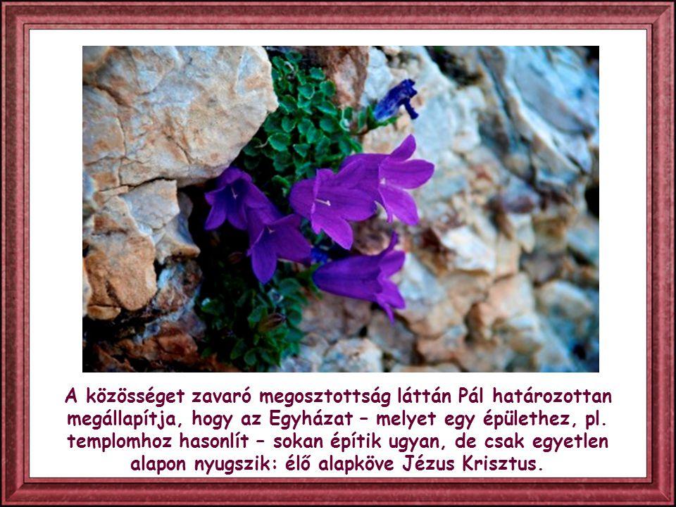 """Így pártoskodás ütötte fel a fejét közöttük: """"én Pállal tartok – mondták egyesek, mások pedig, szintén a számukra kedves apostolra utalva: """"én Apollóval tartok , """"én Péterrel ."""