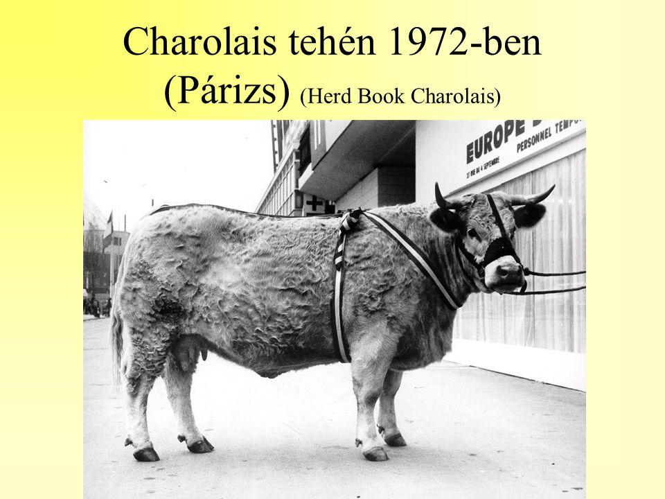 Charolais tehén 1972-ben (Párizs) (Herd Book Charolais)