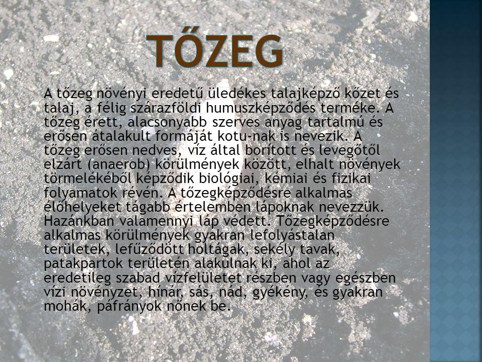 A tőzeg növényi eredetű üledékes talajképző kőzet és talaj, a félig szárazföldi humuszképződés terméke. A tőzeg érett, alacsonyabb szerves anyag tarta