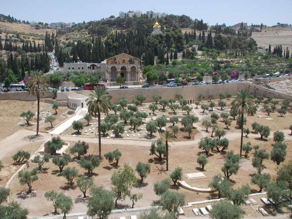 Az Olajfák hegye egy szelíd domb, melyet a zsidó és a keresztény vallások egyaránt tiszteletben tartanak.