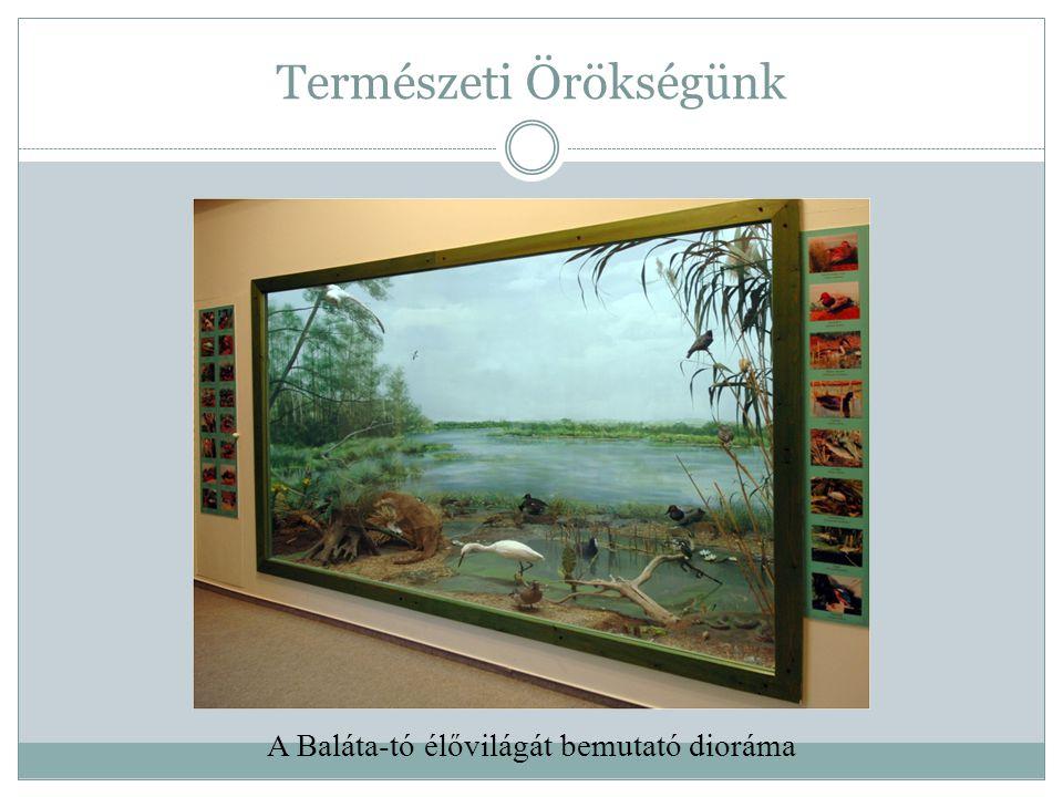 Természeti Örökségünk A Baláta-tó élővilágát bemutató dioráma