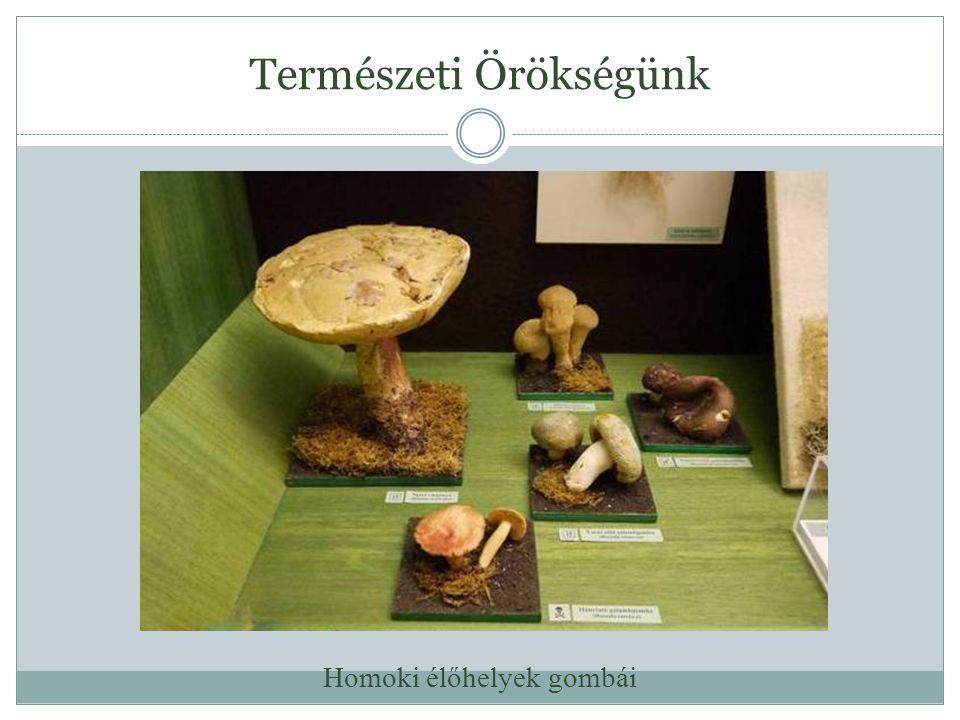 Természeti Örökségünk Homoki élőhelyek gombái