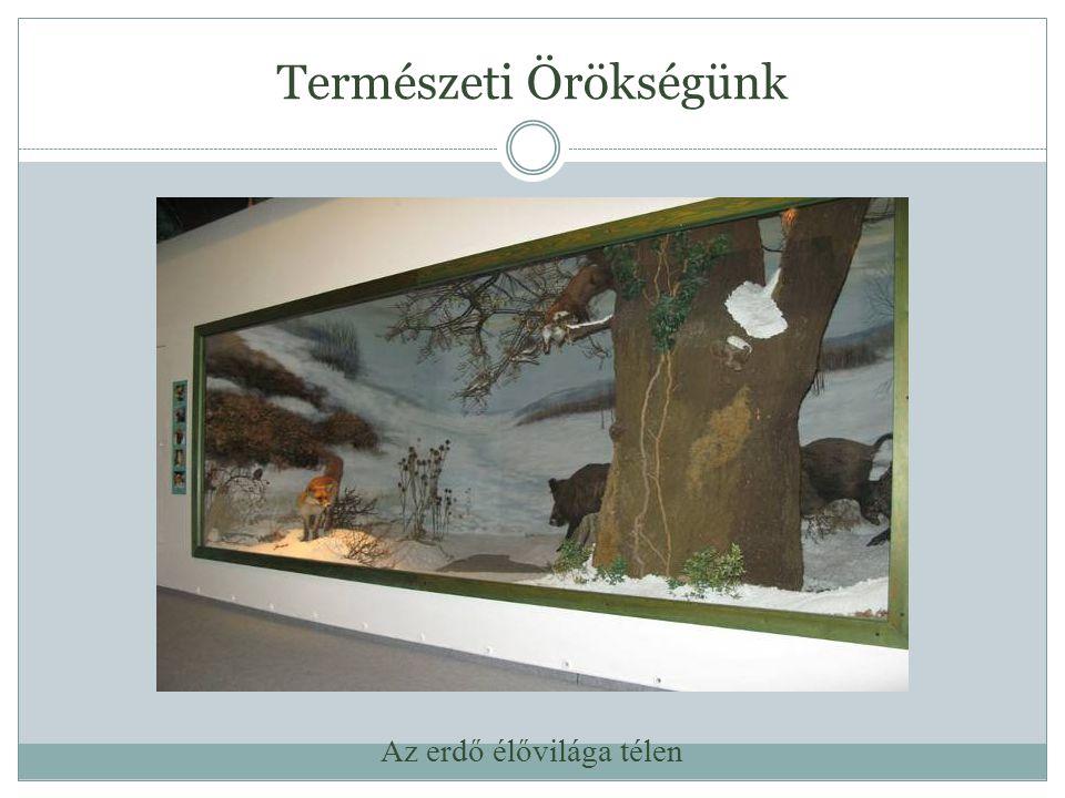 Természeti Örökségünk Látványvitrin a Fekete István Előadóteremben