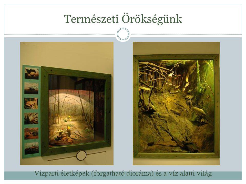 Természeti Örökségünk Vízparti életképek (forgatható dioráma) és a víz alatti világ