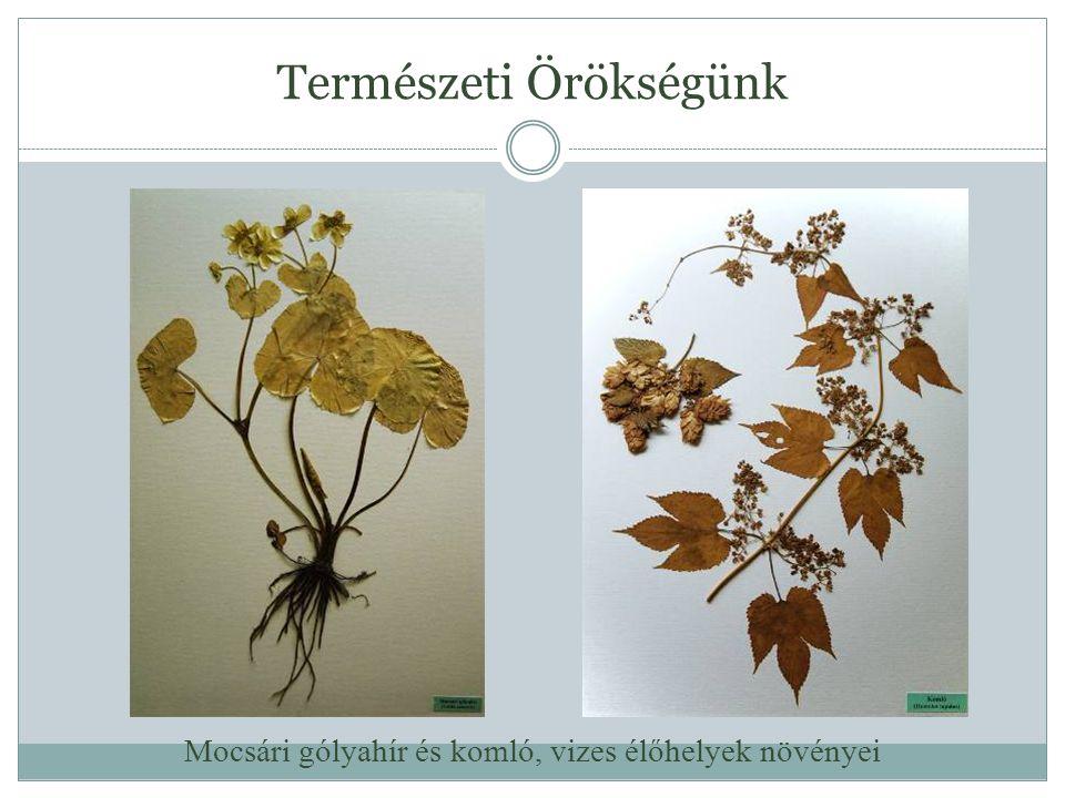Természeti Örökségünk Mocsári gólyahír és komló, vizes élőhelyek növényei