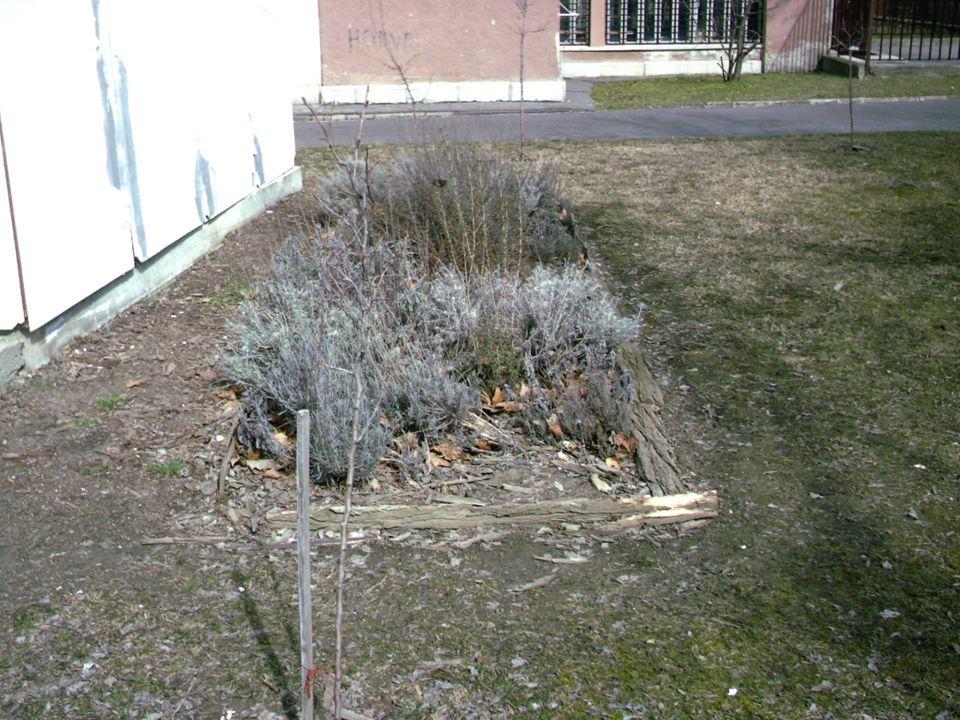 2010.06.05Ökosuli19