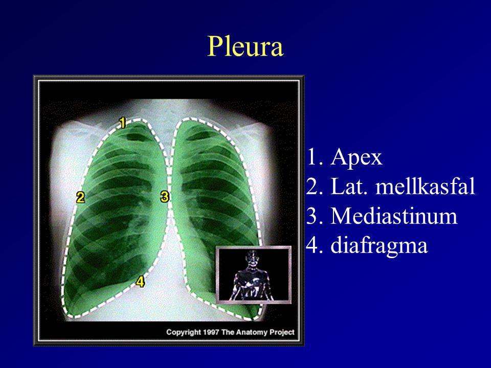 Pneumothorax potentialis okai Levegő: légutakból –Idiopathias –Oesophagus ruptura –COPD –Pos.
