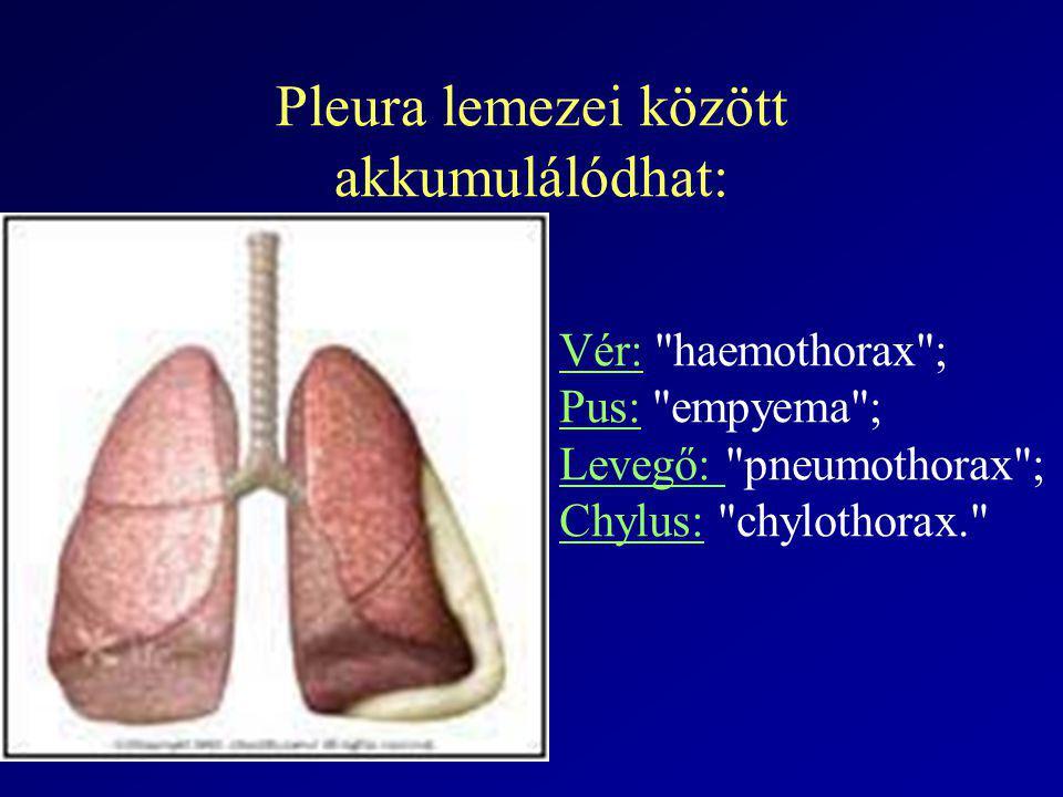 Exszudátum okai TuberculosisEgyoldali Lung ccVéres, nagy menny., Mrtg: parenchymalis lézió, gyors reprodukció PneumoniaMrtg:infiltr.