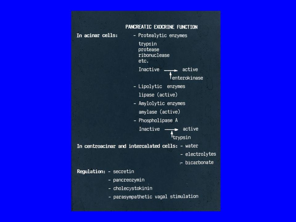 A PANCREAS ÖNEMÉSZTŐDÉSÉT MEGELŐZŐ MECHANIZMUSOK 1.Az enzimek az acinaris sejtek zymogen granuláiban vannak tárolva 2.Az enzimek inaktív formában termelődnek 3.A pancreas-nedvben és pancreas-szövetben a proteolyticus enzimek gátló anyagai vannak jelen.