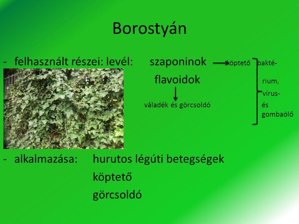 Borostyán -felhasznált részei: levél: szaponinok köptető bakté- flavoidok rium, vírus- váladék és görcsoldó és gombaölő - -alkalmazása:hurutos légúti