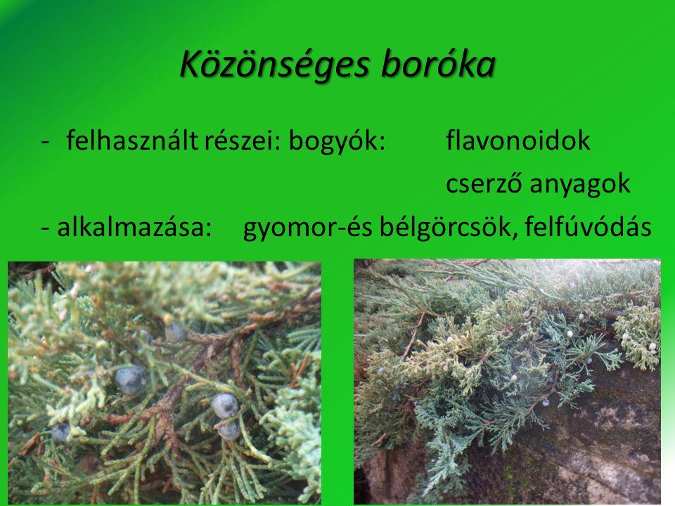 Orvosi levendula -felhasznált részei: virág:illóolaj cserző anyag kumarin flavonoidok -alkalmazása:nyugtató gyomoridegesség, felfúvódás