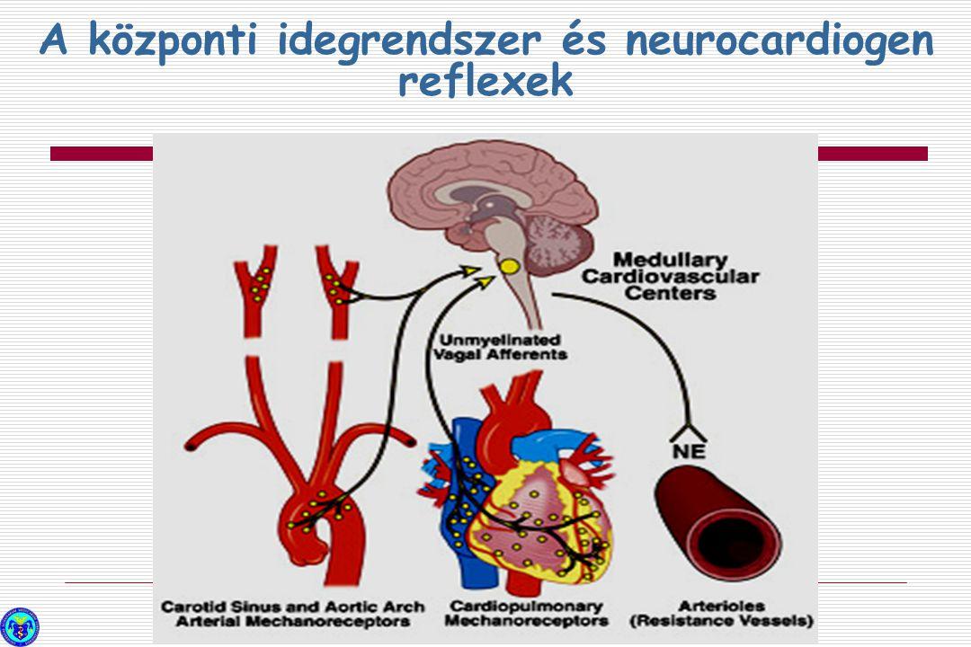 A központi idegrendszer és neurocardiogen reflexek