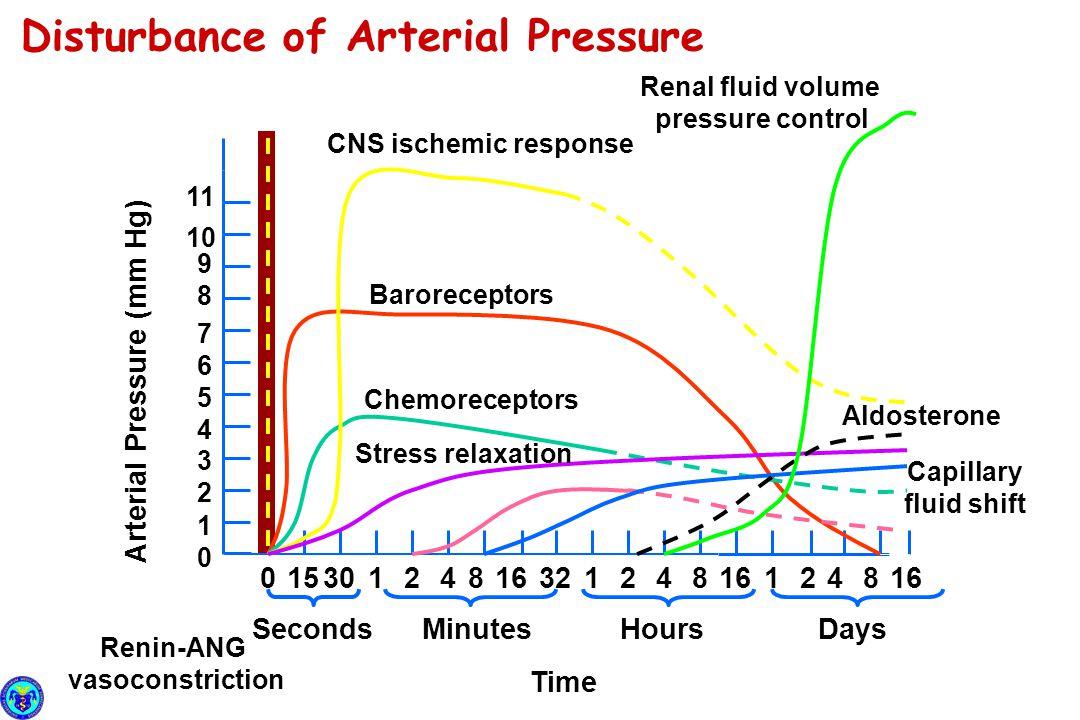 Minutes Arterial Pressure (mm Hg) 1 0153012 7 6 5 4 3 2 8 9 10 11 0 4816321248161248 SecondsHoursDays Time Baroreceptors CNS ischemic response Chemore