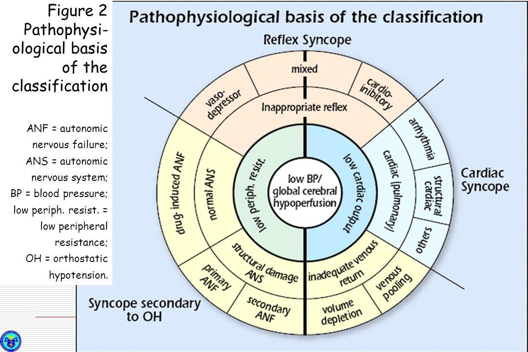 Figure 2 Pathophysi- ological basis of the classification ANF = autonomic nervous failure; ANS = autonomic nervous system; BP = blood pressure; low pe