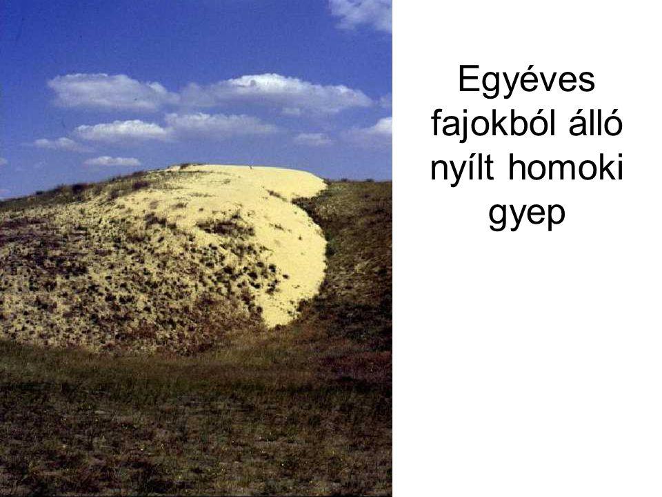 Évelő fajokból álló nyílt homoki gyep