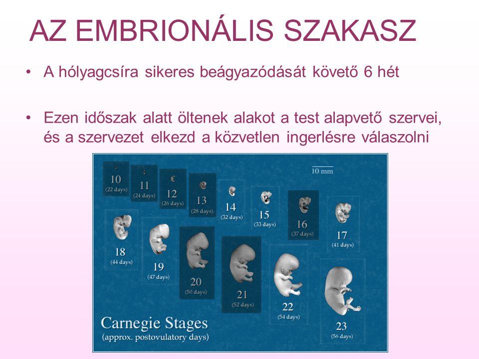 AZ EMBRIÓ NÖVEKEDÉSE A belső sejttömeg három részre válik: Külső réteg (ektoderma) –bőr külső felszíne –szemlencse –belső fül –idegrendszer Középső réteg (mezoderma) –izmok –csontok –keringési rendszer –a bőr rétegei Belső réteg (endoderma) –emésztőrendszer –tüdő