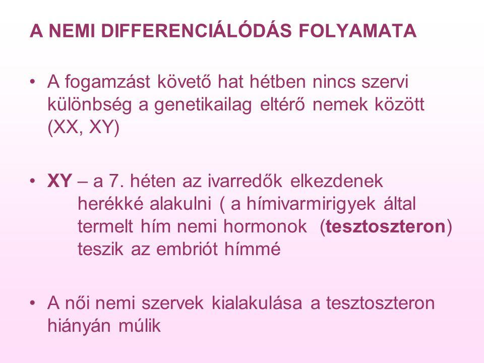 A NEMI DIFFERENCIÁLÓDÁS FOLYAMATA A fogamzást követő hat hétben nincs szervi különbség a genetikailag eltérő nemek között (XX, XY) XY – a 7.