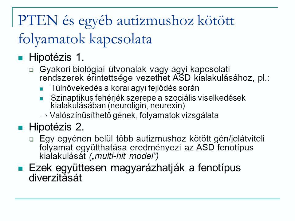 PTEN és egyéb autizmushoz kötött folyamatok kapcsolata Hipotézis 1.  Gyakori biológiai útvonalak vagy agyi kapcsolati rendszerek érintettsége vezethe