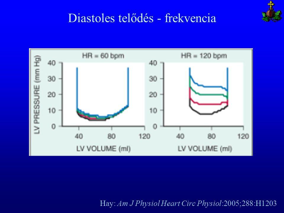 Hay: Am J Physiol Heart Circ Physiol:2005;288:H1203 Diastoles telődés - frekvencia