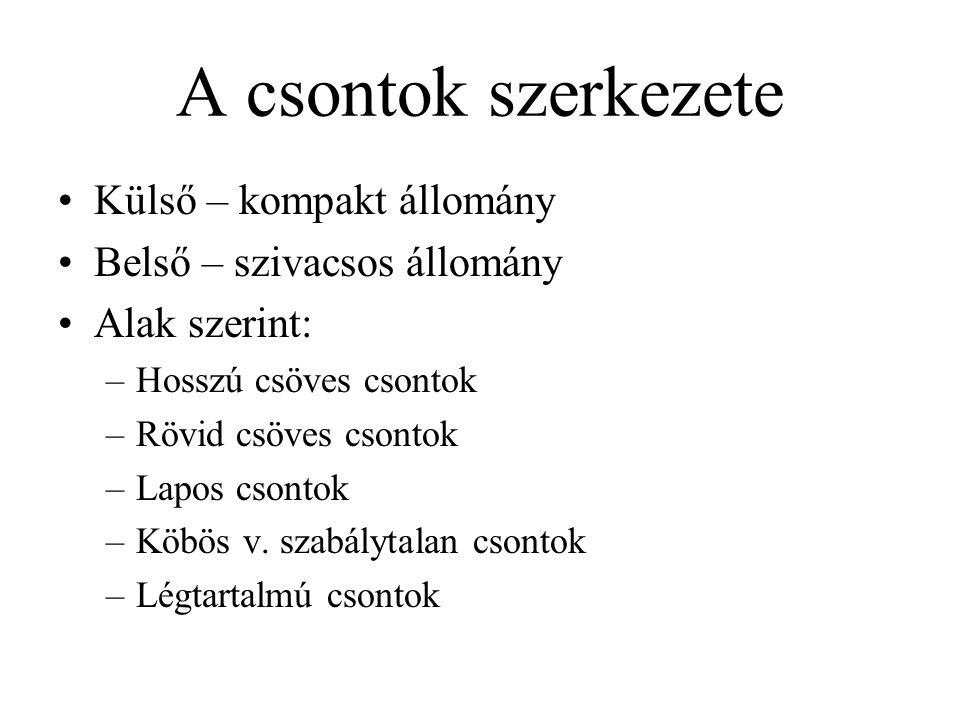 A mellkas (thorax) csontjai