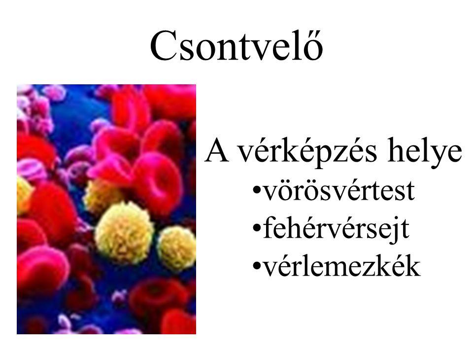 Arckoponya (15 csont) –1 rostacsont (os ethmoidale) –1 ekecsont (vomer) –1 állkapocs (mandibula) –2 felső állcsont (maxilla) –2 járomcsont (os zygomaticum) –2 könnycsont (os lacrimale) –2 orrcsont (os nasale) –2 szájpadcsont (os palatinum) –2 alsó orrkagyló A koponya (cranium) csontjai