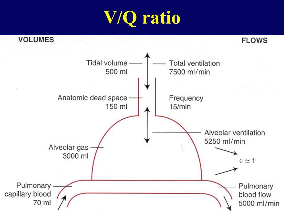 V/Q mismatch (3-compartment model)