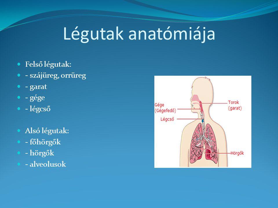 Légutak anatómiája Felső légutak: - szájüreg, orrüreg - garat - gége - légcső Alsó légutak: - főhörgők - hörgők - alveolusok