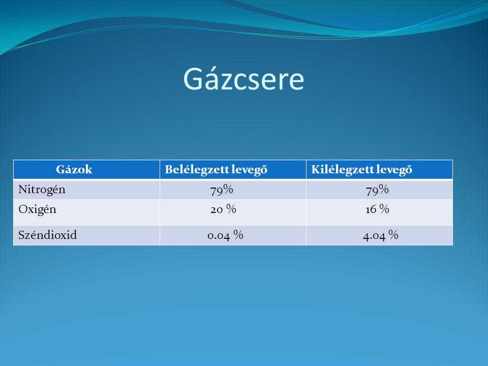 Gázcsere GázokBelélegzett levegőKilélegzett levegő Nitrogén 79% Oxigén 20 % 16 % Széndioxid 0.04 % 4.04 %
